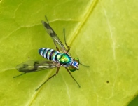 Colourful Fly