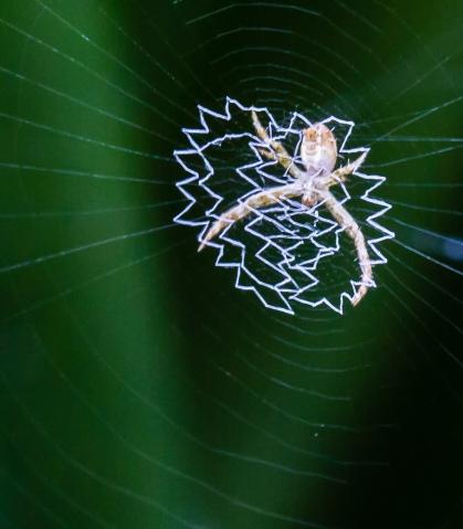 Intricate Web