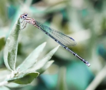 Being studied by a Damselfly
