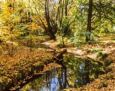 Reedy Creek